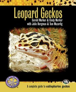 Leopard Geckos: A Complete Guide to Eublepharine Geckos
