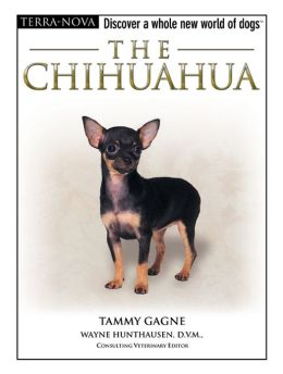 The Chihuahua