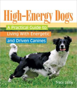 High-Energy Dogs