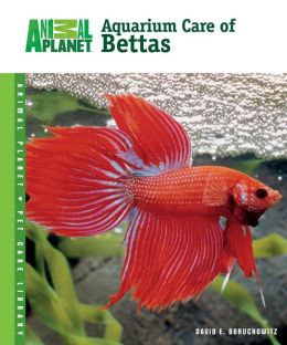 The Complete Guide to Betta Care