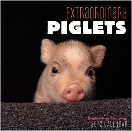 2012 Extraordinary Piglets Mini Wall Calendar