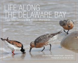 Life Along the Delaware Bay: Cape May, Gateway to a Million Shorebirds