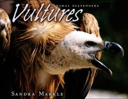 Vultures (Animal Scavengers Series)