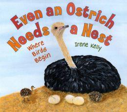 Even an Ostrich Needs a Nest: Where Birds Begin