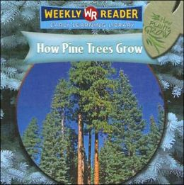 How Pine Trees Grow
