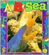 A... B... Sea