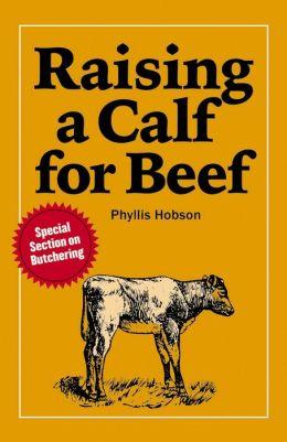Raising a Calf for Beef