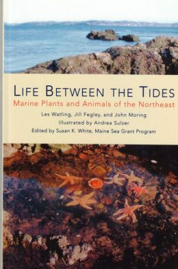 Life Between the Tides: Marine Plants and Animals of the Northeast
