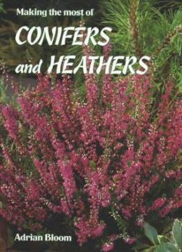 Making the Most of Conifers and Heathers