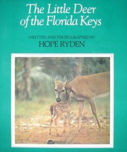 Little Deer of the Florida Keys