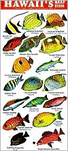 Hawaii's Reef Fish Plasic Card