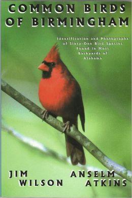 Common Birds of Birmingham