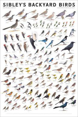 Sibley's Backyard Birds: Western North America