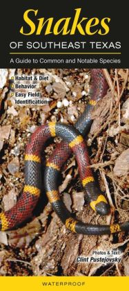 Snakes of Southeast Texas: A Guide to Common and Notable Species