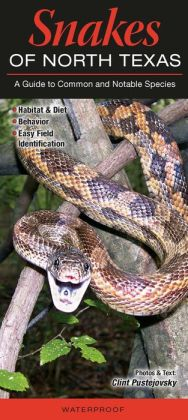 Snakes of North Texas: A Guide to Common and Notable Species