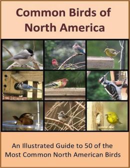 Common Birds of North America: An Illustrated Guide to 50 of the Most Common North American Birds