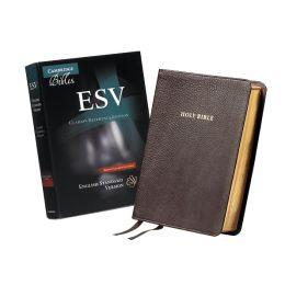 ESV Clarion Reference Brown Calfskin ES485:X