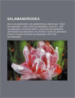 Salamandroidea: Mole salamanders, Salamandridae, Amphiuma, Tiger Salamander, Long-toed Salamander, Axolotl, Fire Salamander, Eastern newt