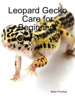 Leopard Gecko Care for Beginners