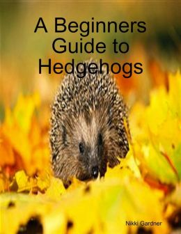 A Beginners Guide to Hedgehogs