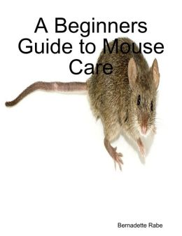 A Beginners Guide to Mouse Care