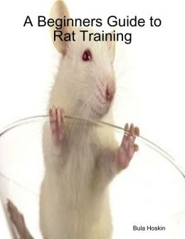 A Beginners Guide to Rat Training