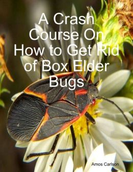 A Crash Course On How to Get Rid of Box Elder Bugs