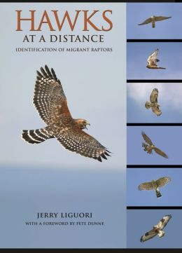 Hawks at a Distance: Identification of Migrant Raptors