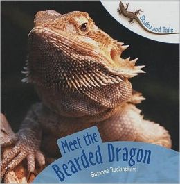 Meet the Bearded Dragon