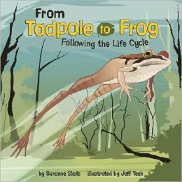 From Tadpole to Frog: Following the Life Cycle