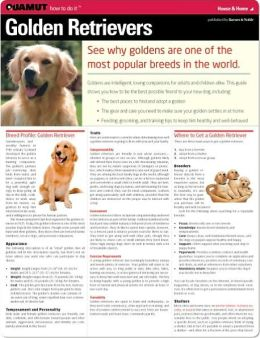 Golden Retrievers (Quamut)