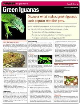 Green Iguanas (Quamut)