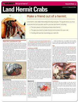 Land Hermit Crabs (Quamut)