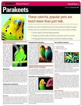 Parakeets (Quamut)