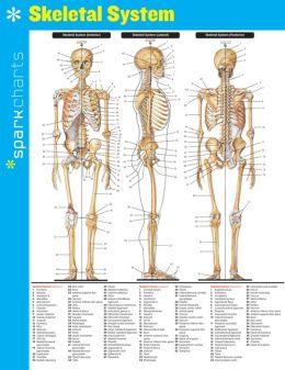 Skeletal System SparkCharts