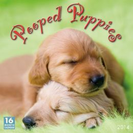 2014 Pooped Puppies Wall Calendar