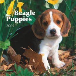 Beagle Puppies 2009 Mini Calendar