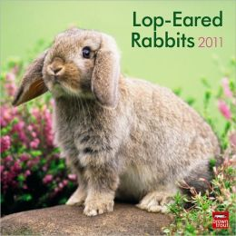 2011 Lop-Eared Rabbits Square Wall Calendar