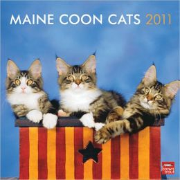 2011 Maine Coon Cats Square Wall Calendar