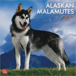 2011 Alaskan Malamutes Square Wall Calendar