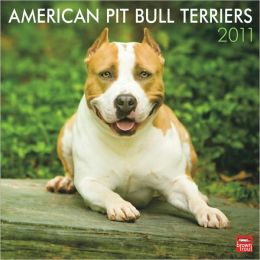 2011 American Pit Bull Terriers Square Wall Calendar