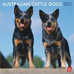 2011 Australian Cattle Dogs Square Wall Calendar