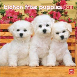 2011 Bichon Frise Puppies Mini Wall Calendar