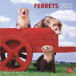 2012 Ferrets Square 12X12 Wall Calendar