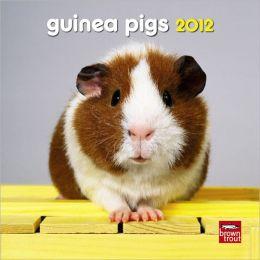 Guinea Pigs 2012 7X7 Mini