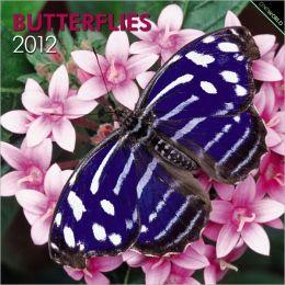 2012 Butterflies Square 12X12 Wall Calendar