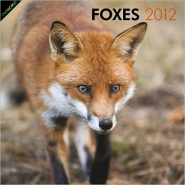 2012 Foxes Square 12X12 Wall Calendar