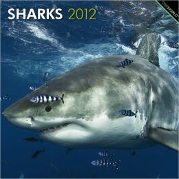 2012 Sharks Square 12X12 Wall Calendar