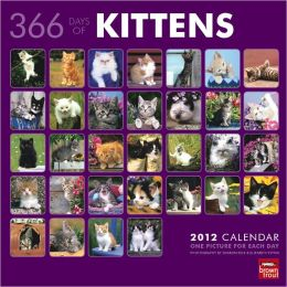 2012 Kittens 366 Days Square 12X12 Wall Calendar