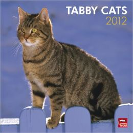 2012 Tabby Cats Square 12X12 Wall Calendar
